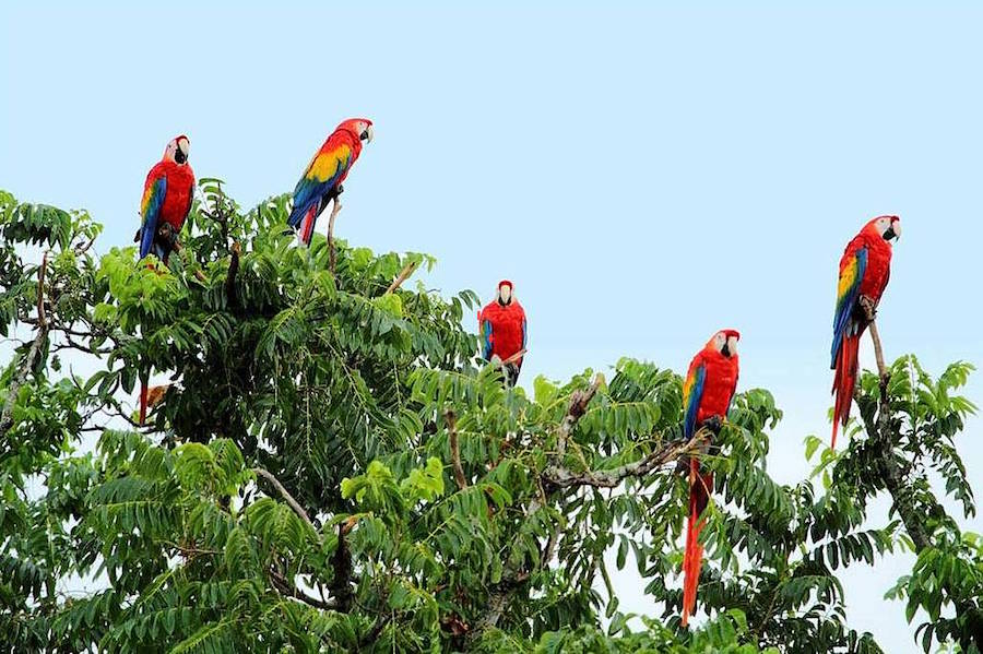 macawas Punta Islita